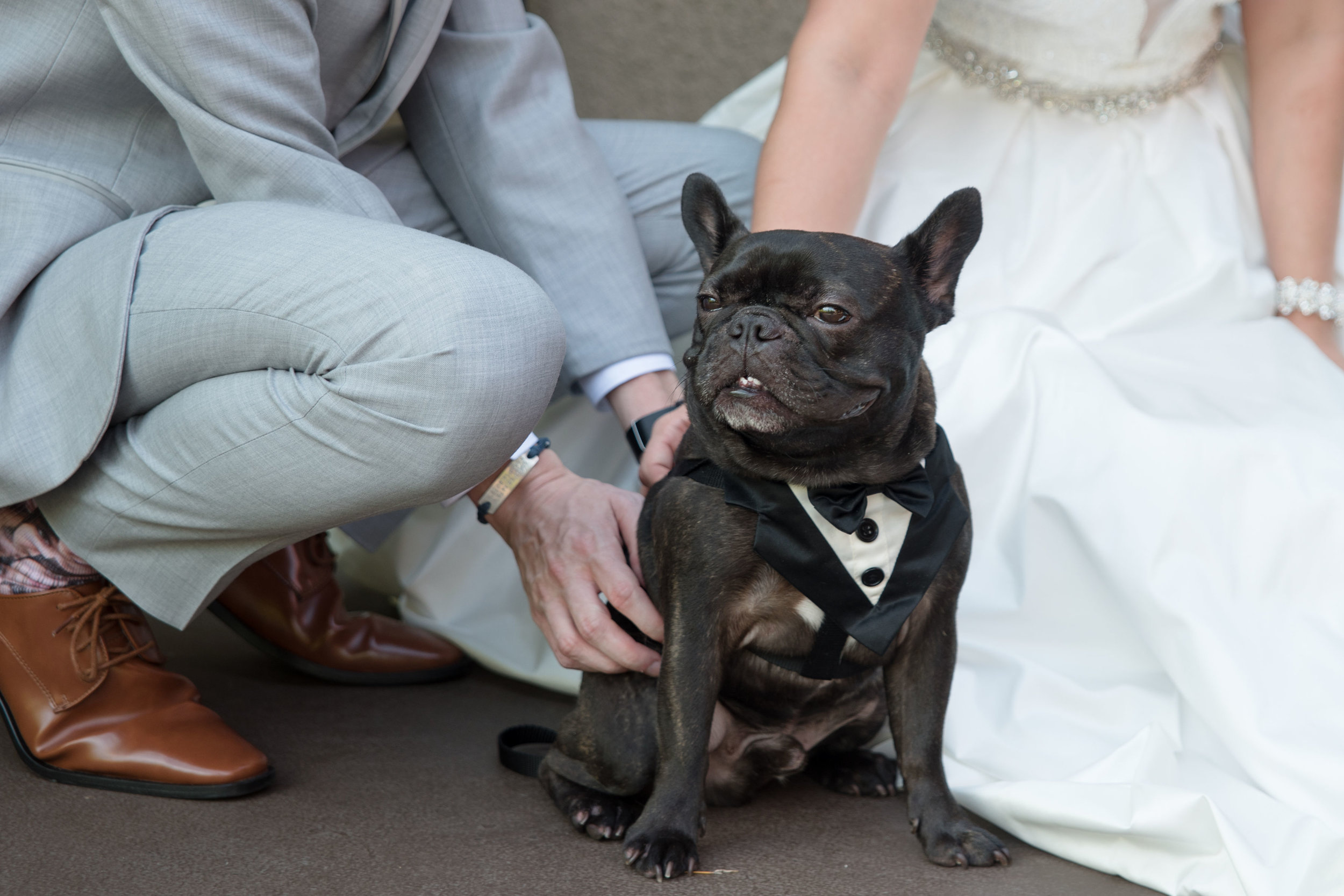 adorable-smile-from-dog-in-wedding
