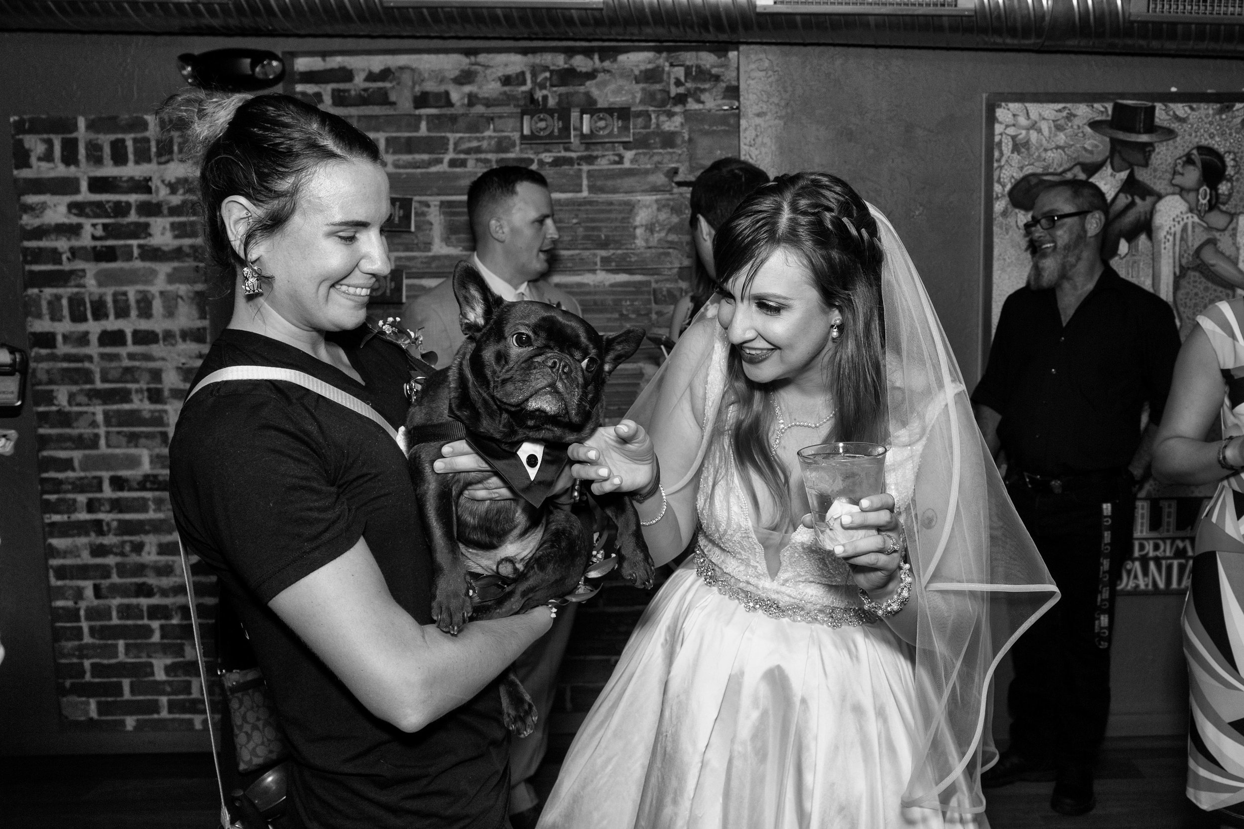 dog-and-bride-at-cocktail-hour
