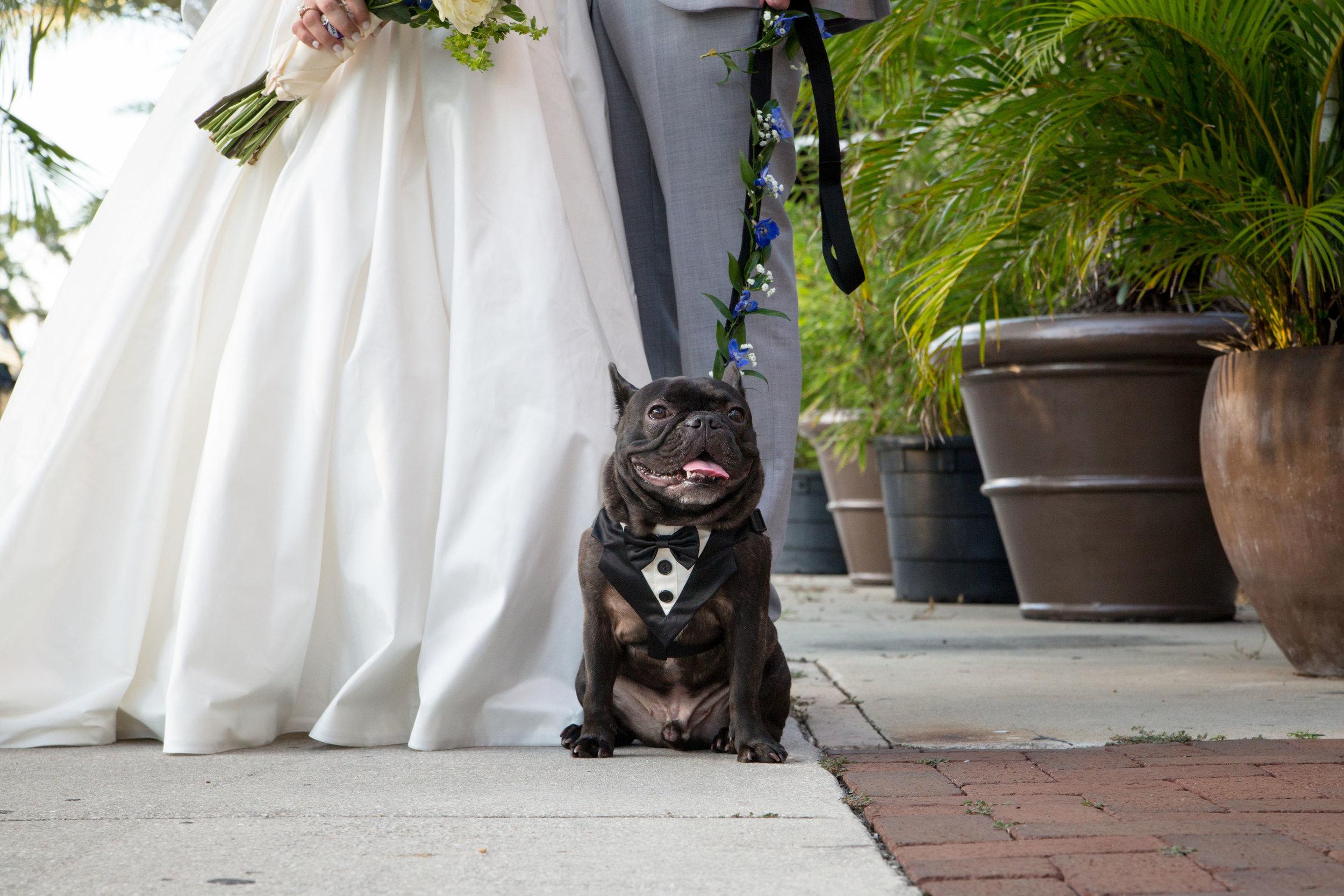 dog-in-wedding-photos