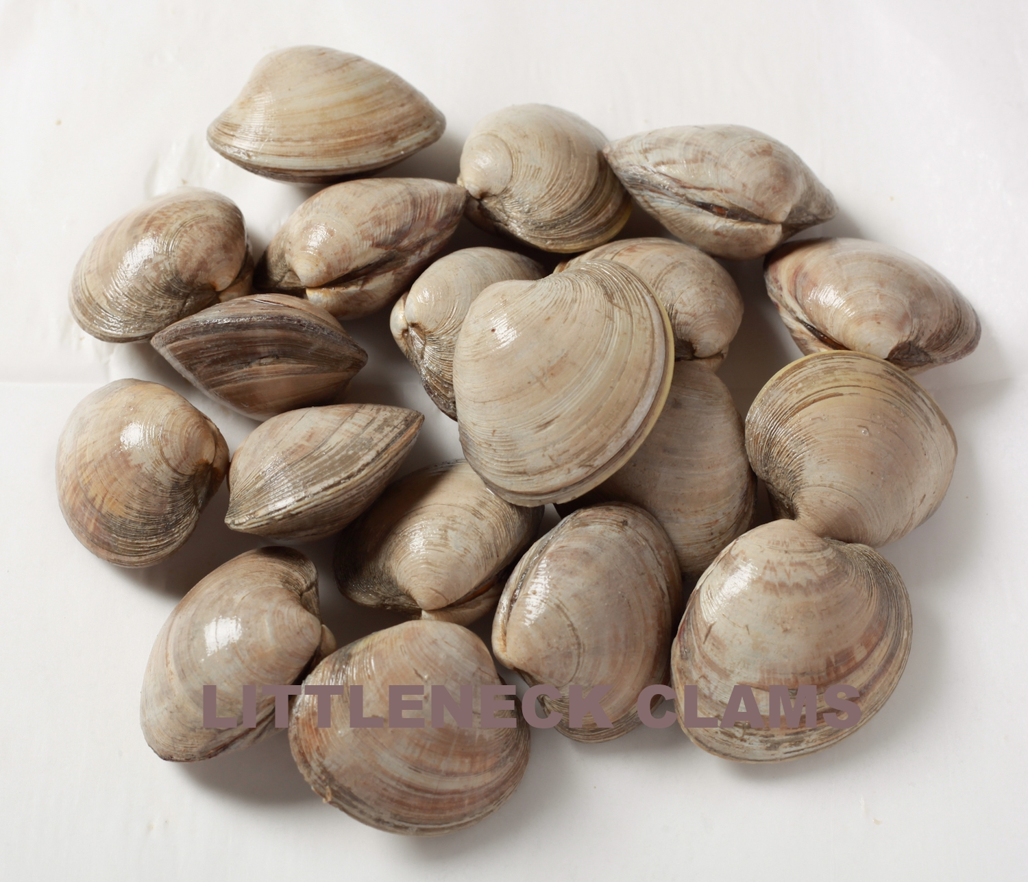 San_Francisco_Fish_Co,LiveLittleNeckClams,10-20ct,1lb (3 of 3).jpg