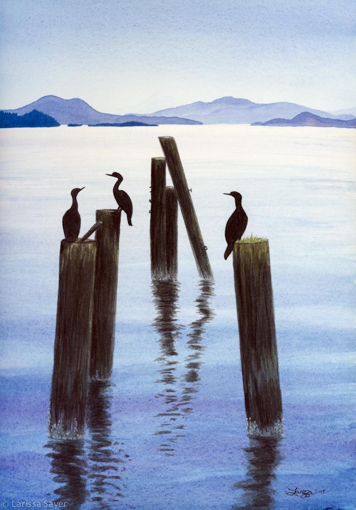 A Sunning Of Cormorants