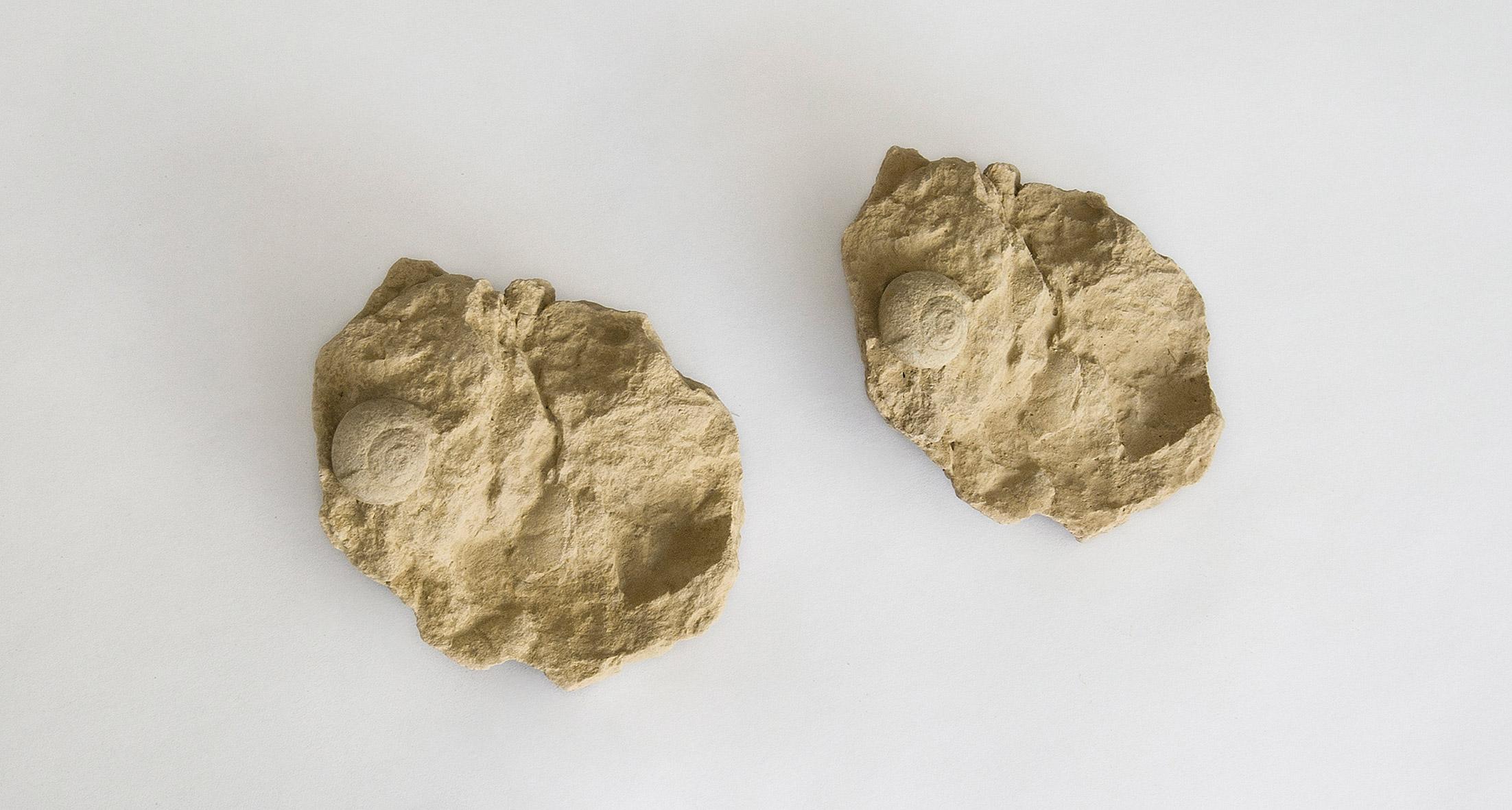 Larisa-Sitar_fossil-collection-1.jpg