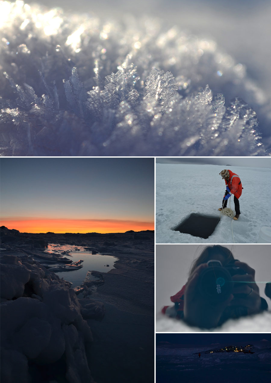 icehollcollage