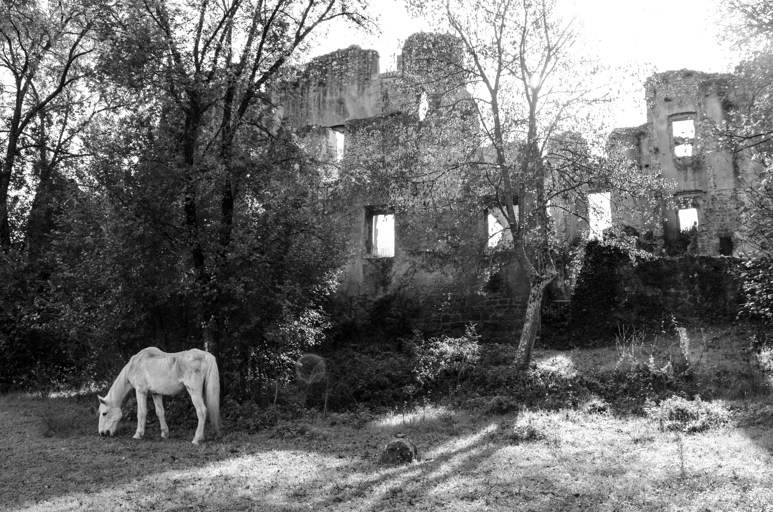 The ancient city of Monterano.