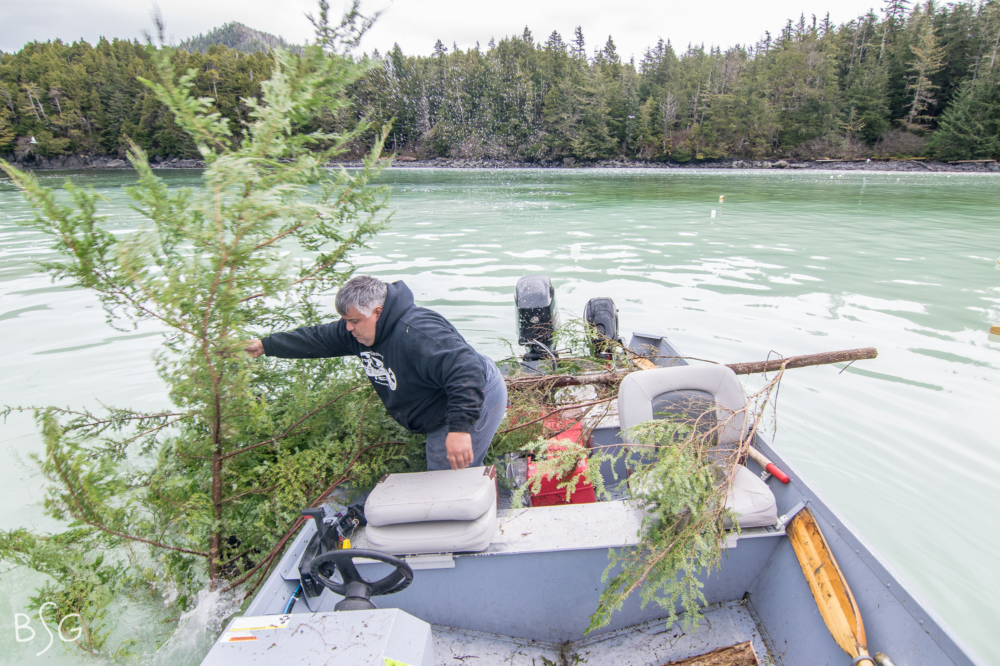 Wade Martin anchors hemlock branches into a cove, thick and foamy with herring spawn. Branches are left for days until the water clears and they are pulled to reveal a thick coating of fresh delicious herring spawn. The fish are left unharmed.