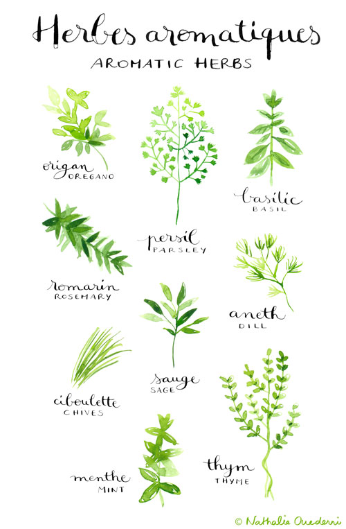 A poster listing aromatic herbs