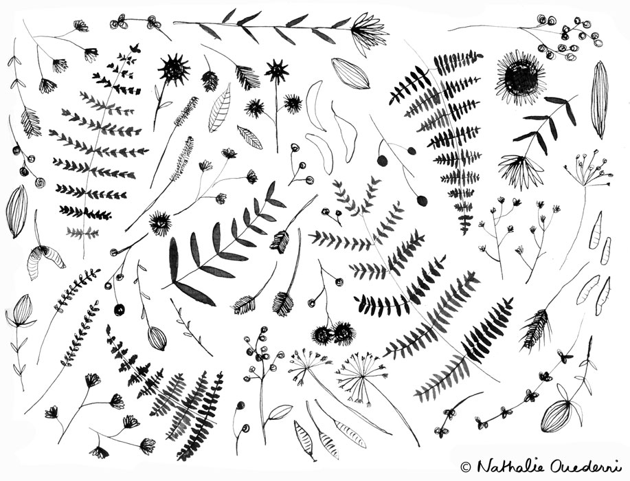 Ferns-&-dry-leaves