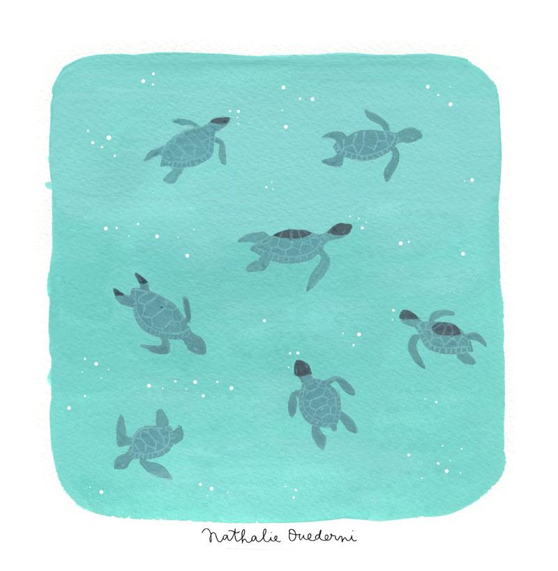 04-turtles.jpg