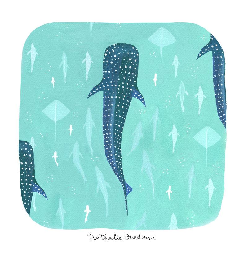 07-whale-shark-02.jpg