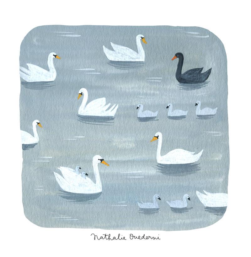 13-Swans.jpg