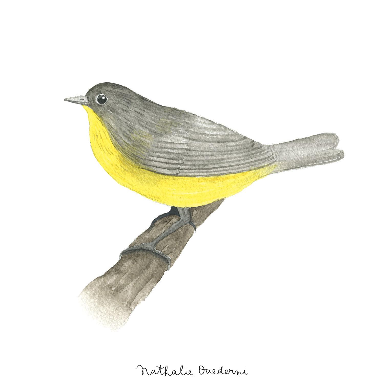 bird-05.jpg