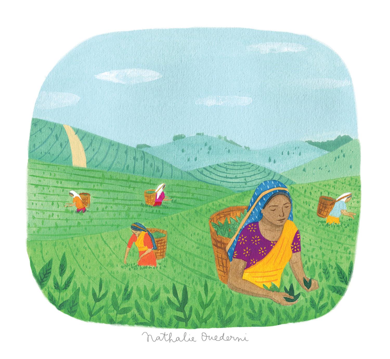 Sri Lanka illustration
