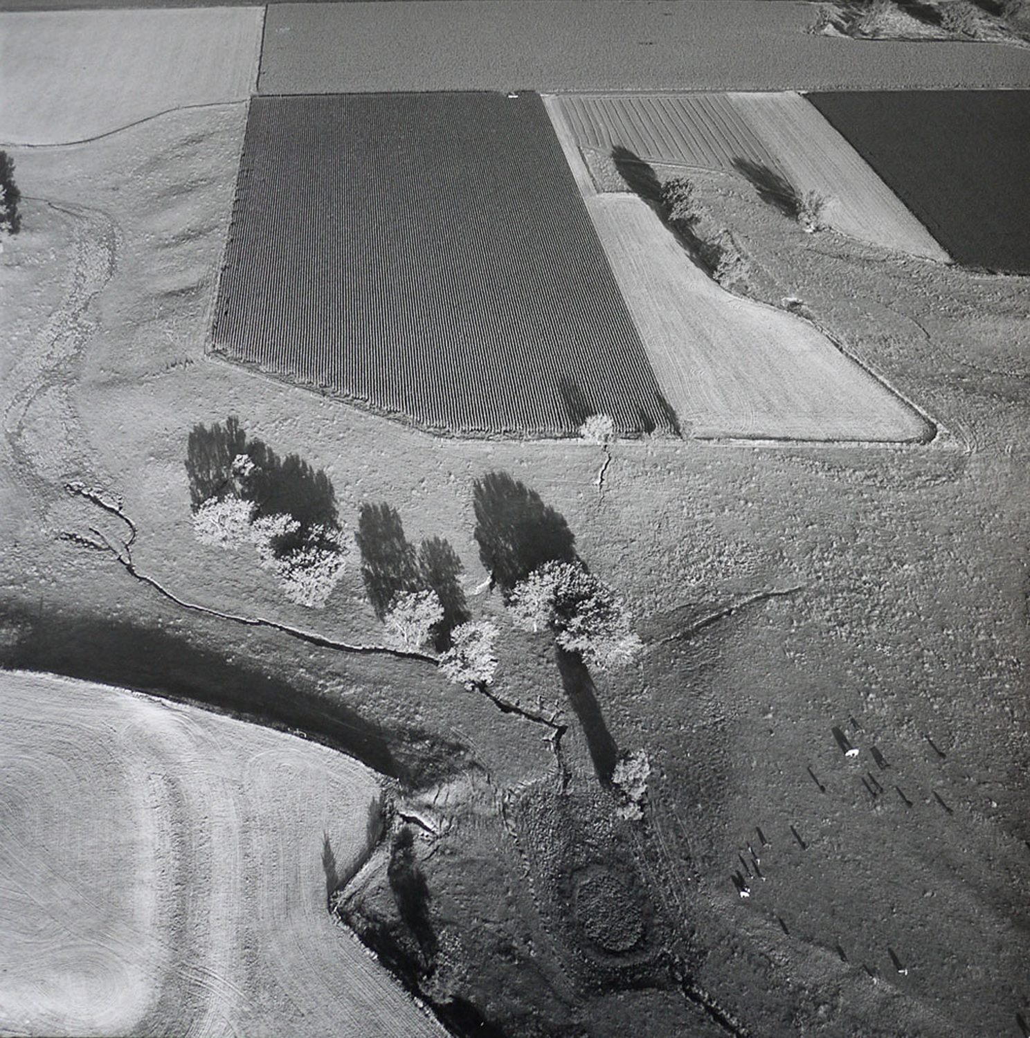 PASTURE_AND_CULTIVATION_AUGUST_23_1990.jpg