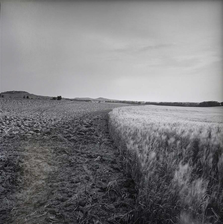 Wheat_field_May,21,1992-2.jpg
