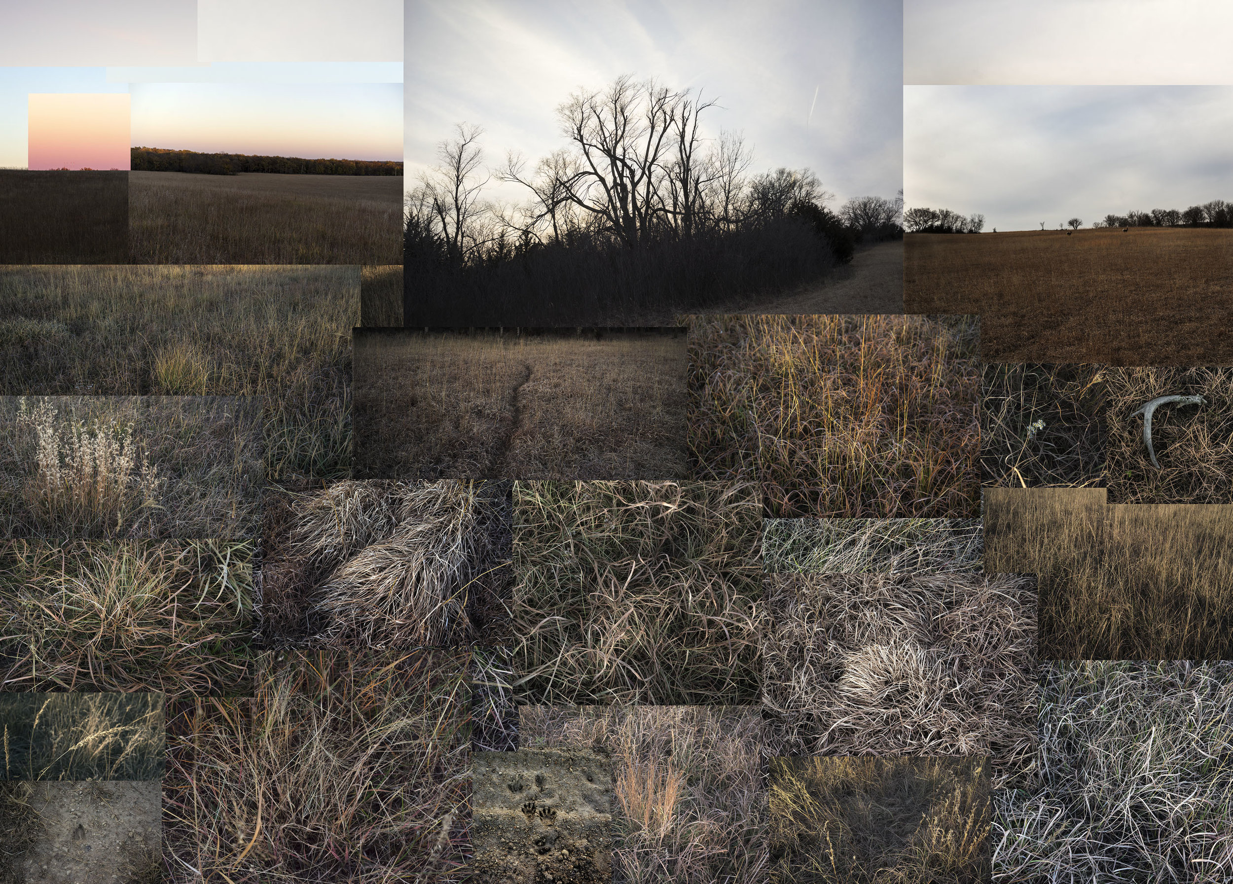 terry.evans-Fent Prairie Janury 2019.jpg