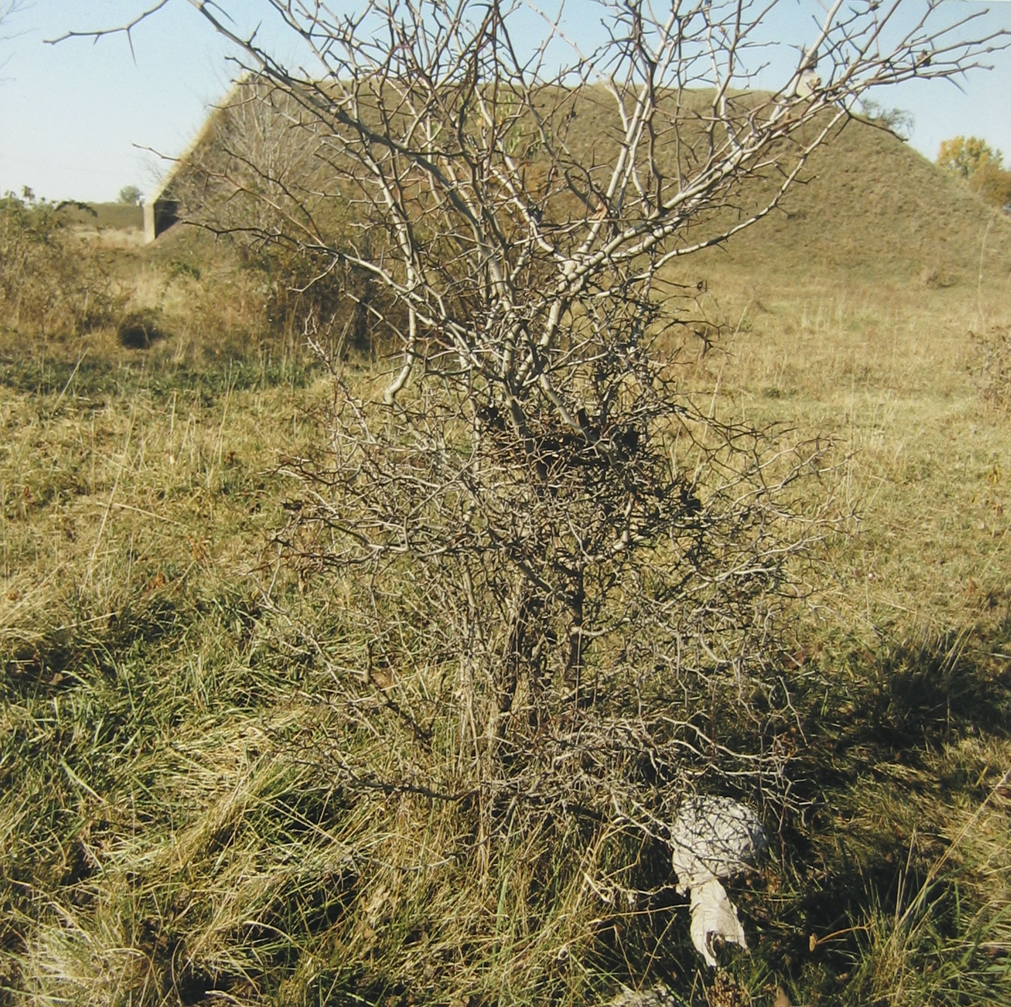 Ammunition storage bunker and bush, October 1995