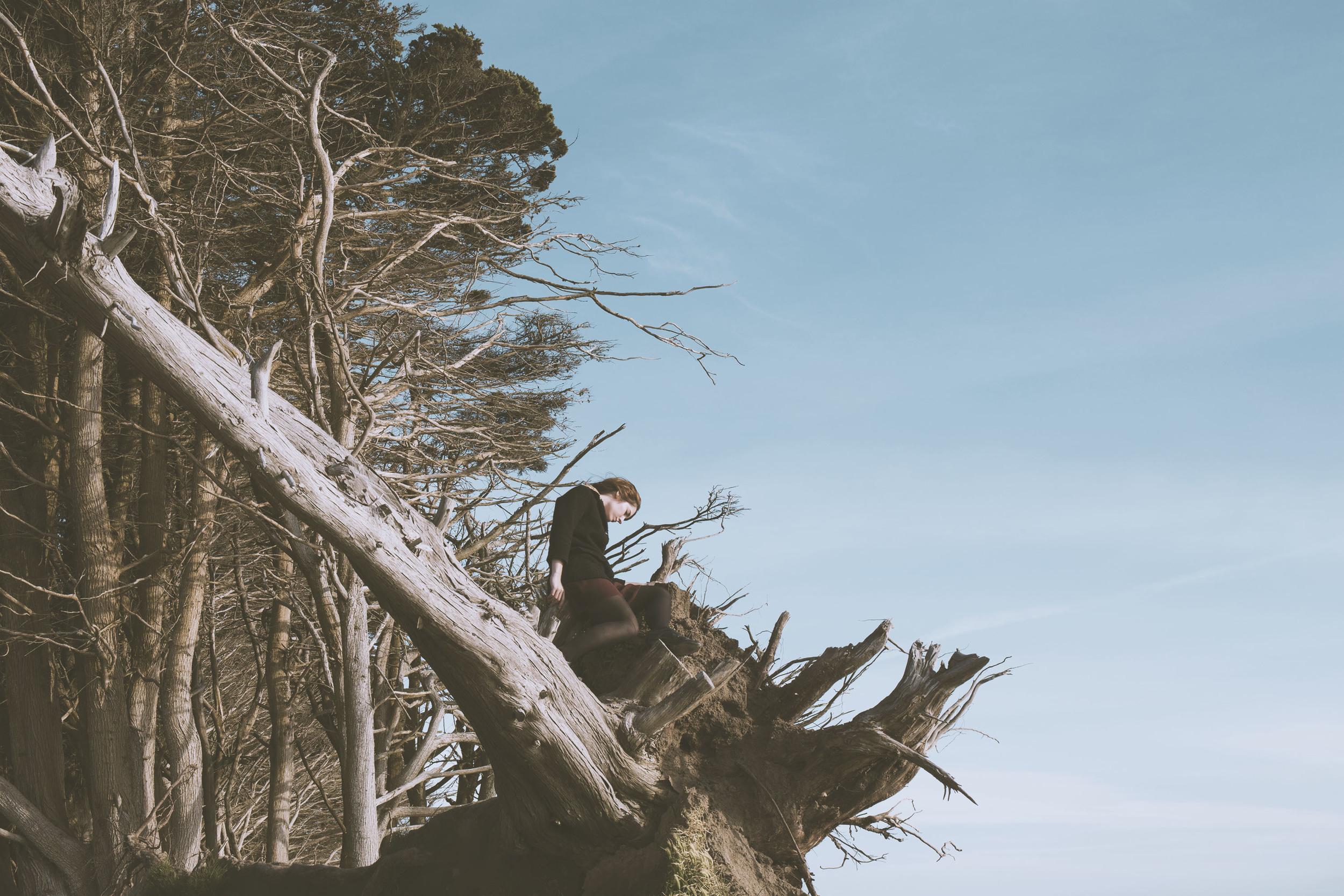 FR_manav_5_fallentrees.jpg