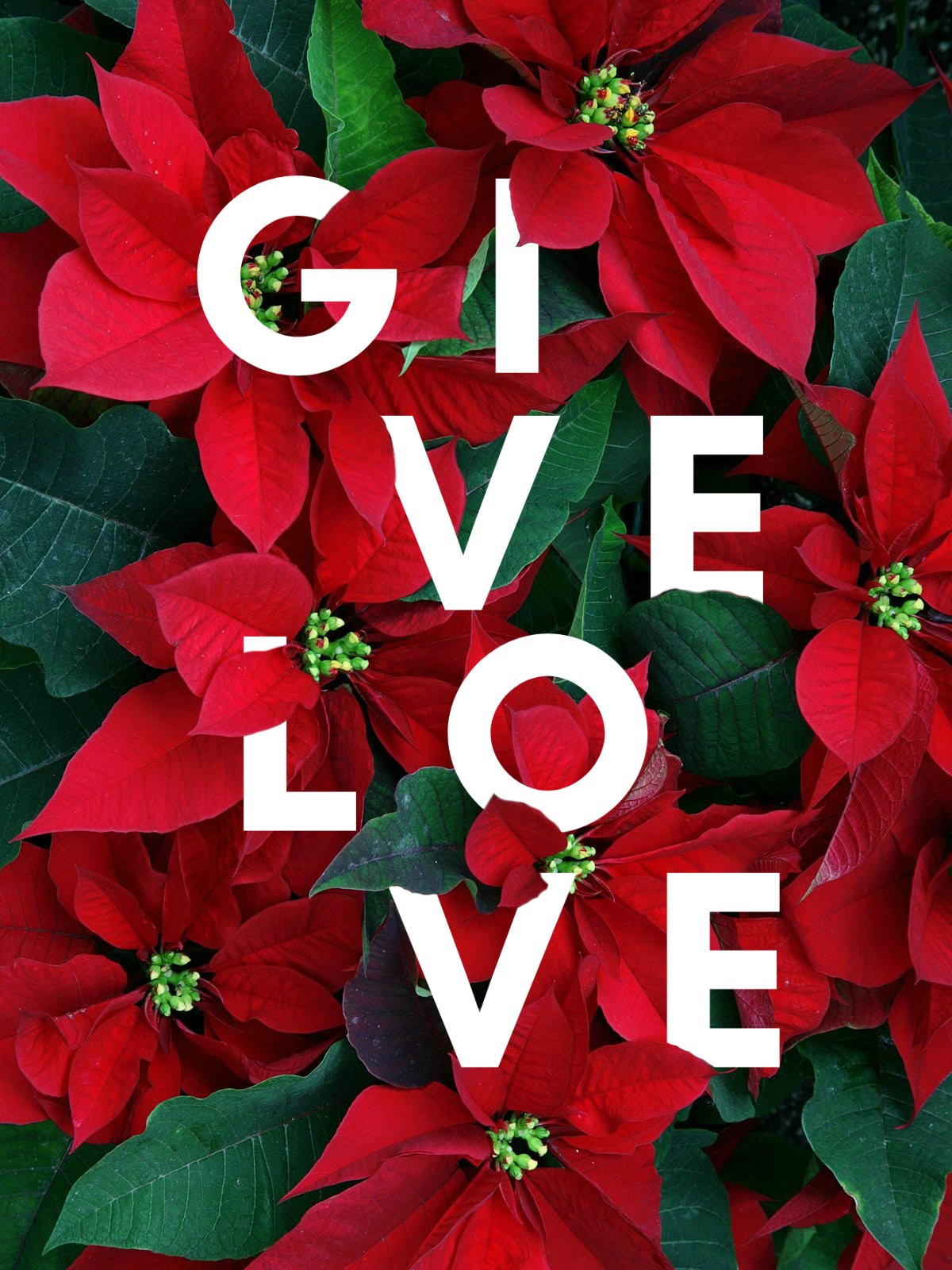 Give Love Poinsettia Graphic.jpg