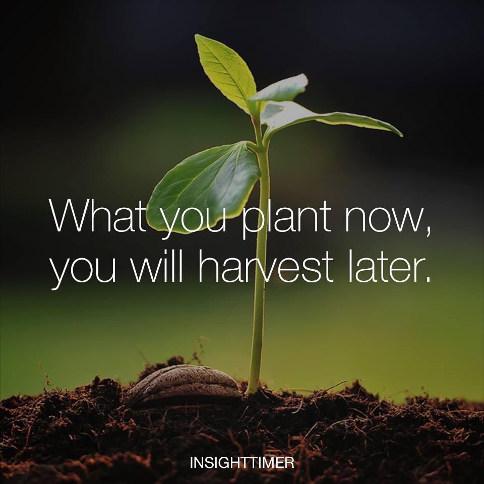 Plant Now.jpg