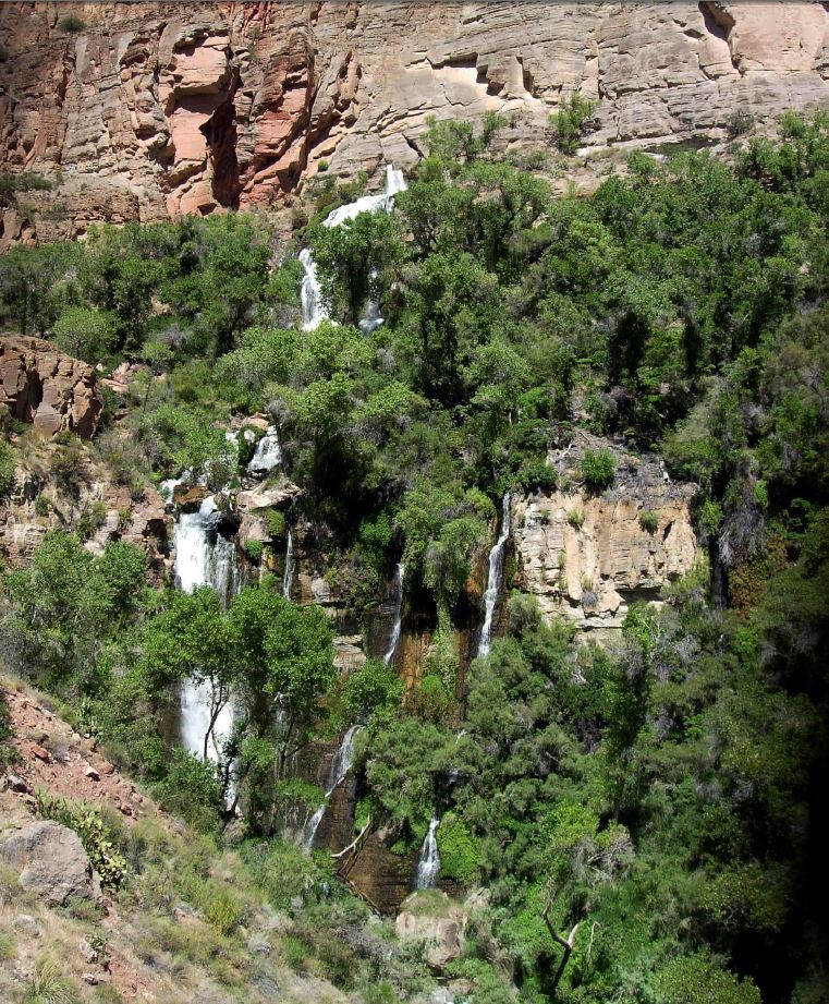 Thunder Spring, located above Tapeats Creek in Grand Canyon. Photo by Springs Stewardship Institute.