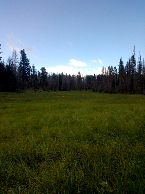 Tres Coyote Springs on Apache-Sitgreaves National Forest.