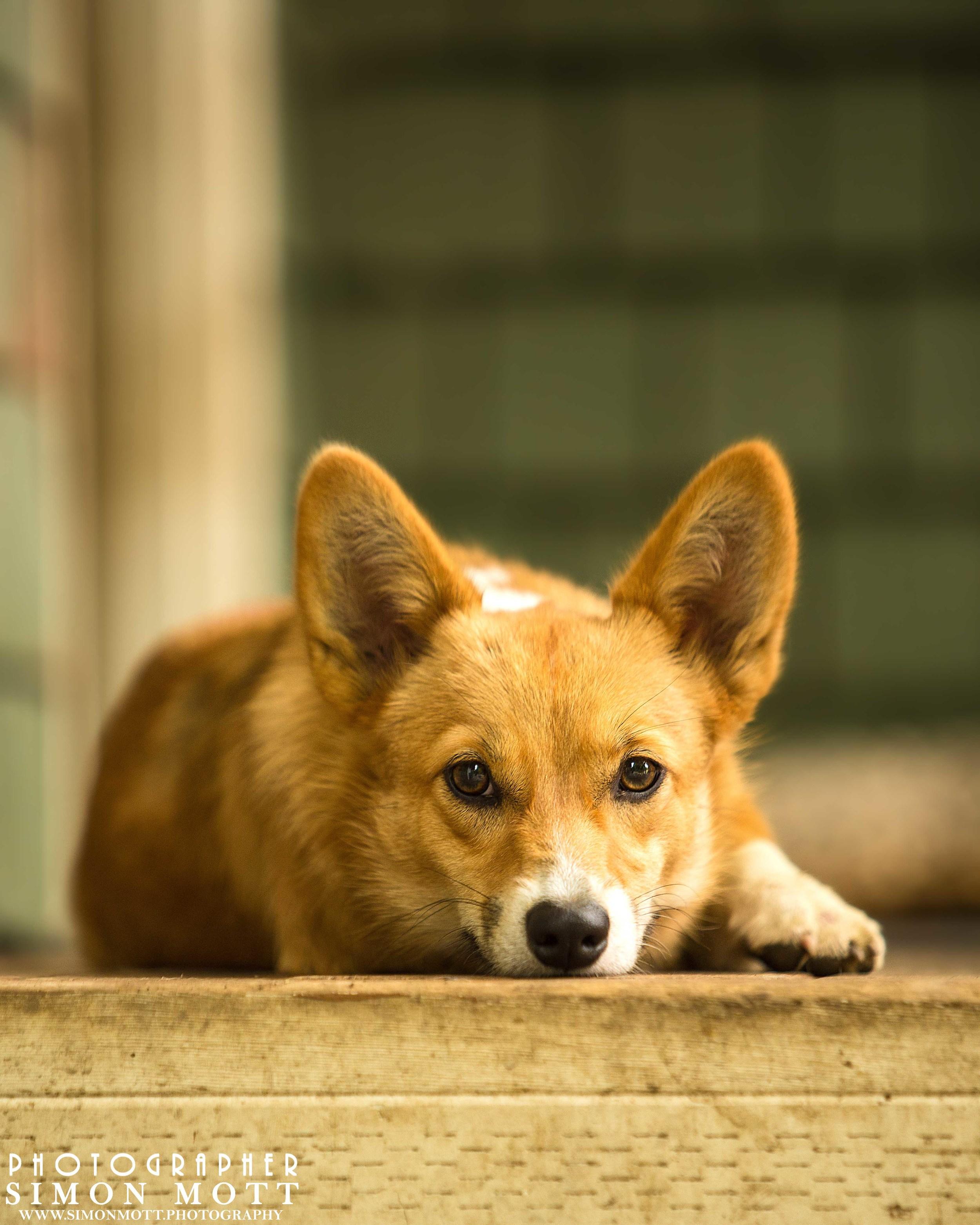 Pet Photography portrait session