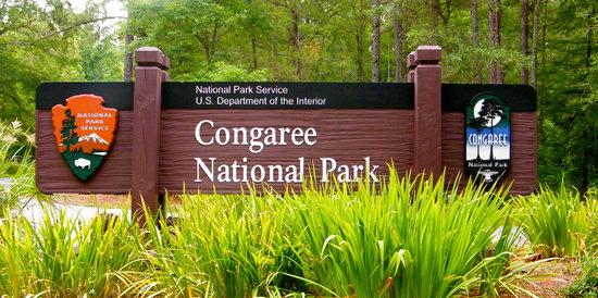 congaree-national-park.jpg