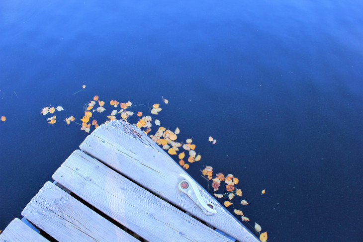 I FOUND THESE SMALL LEAVES TRYING TO ESCAPE THE LAKE. THEIR PLAN WAS TO FORM A CHAIN AND ONE BY ONE CLIMB ONTO THE DOCK. BEYOND THAT, THEIR PLAN WASN'T FULLY DEVELOPED.