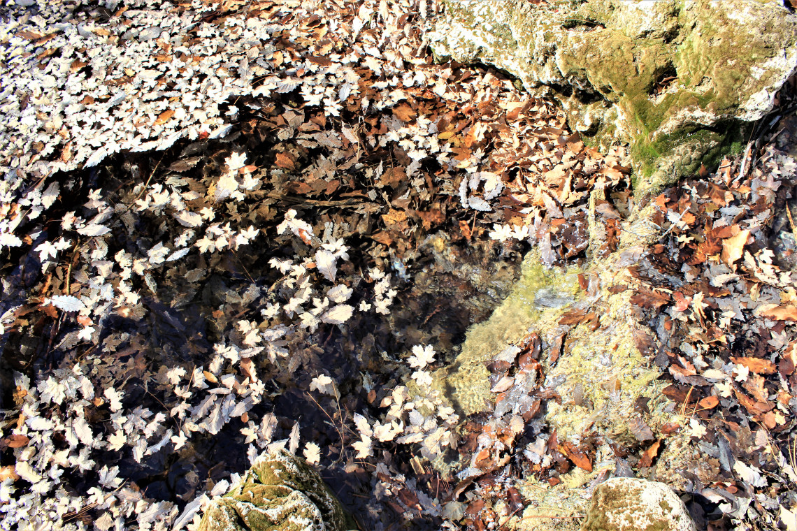 A small pool of clear water with small oak leaves.