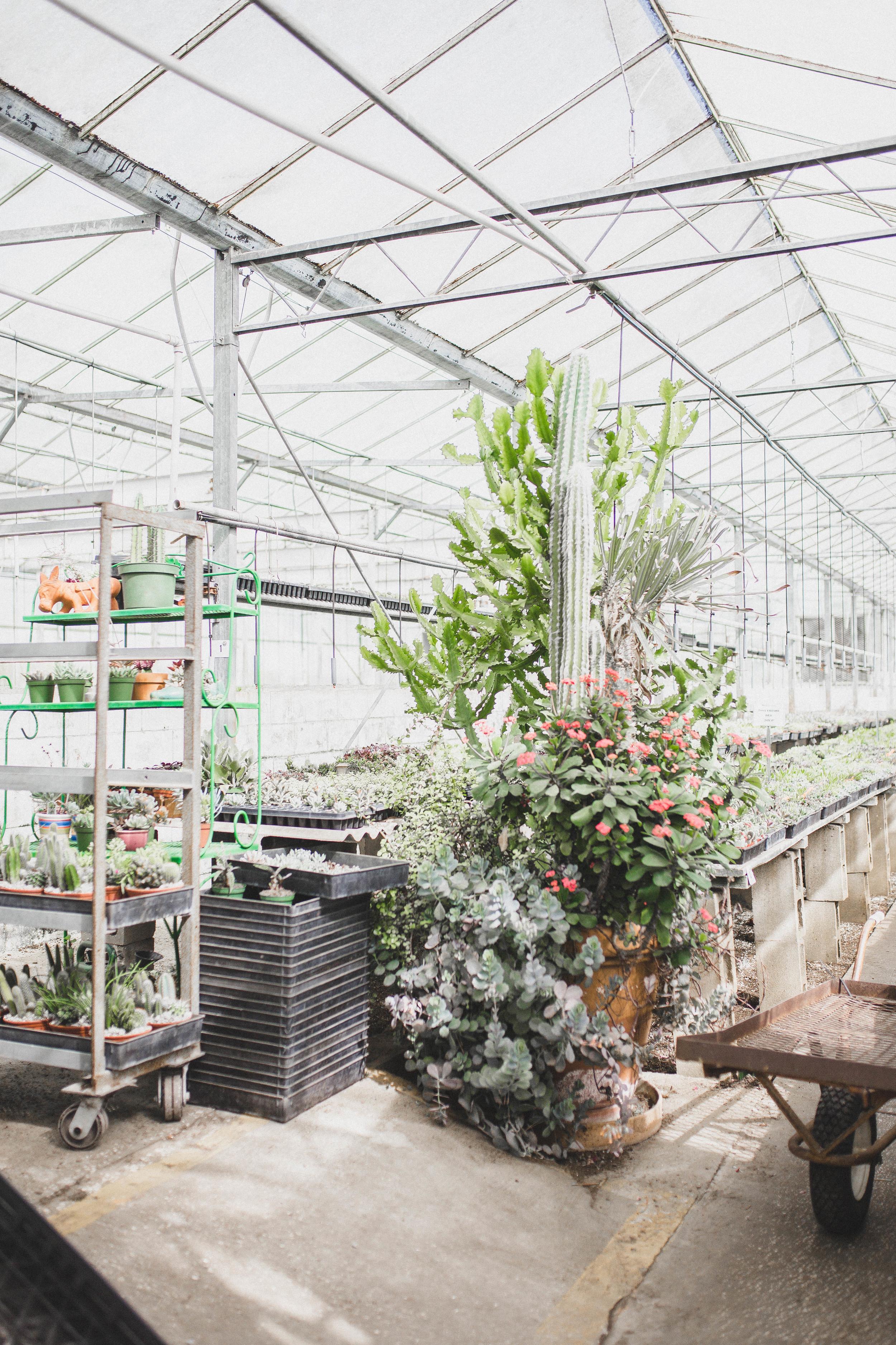 Plants-3.jpg