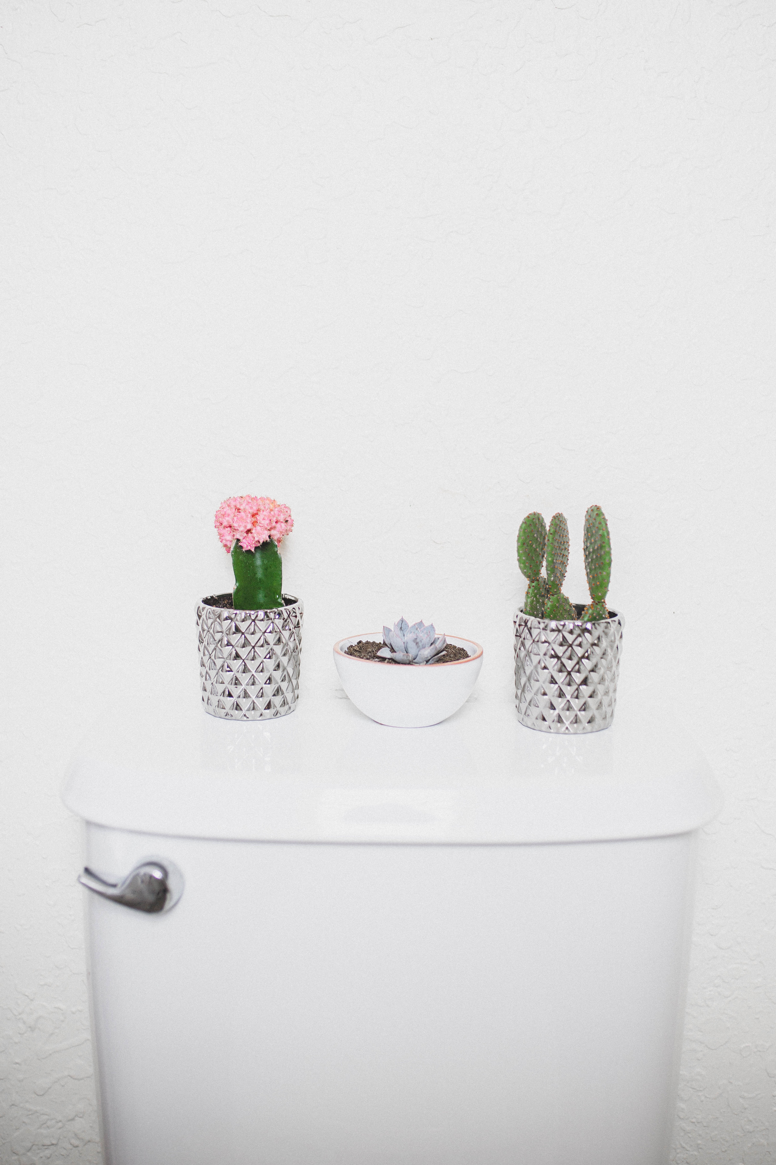 Plants-2.jpg