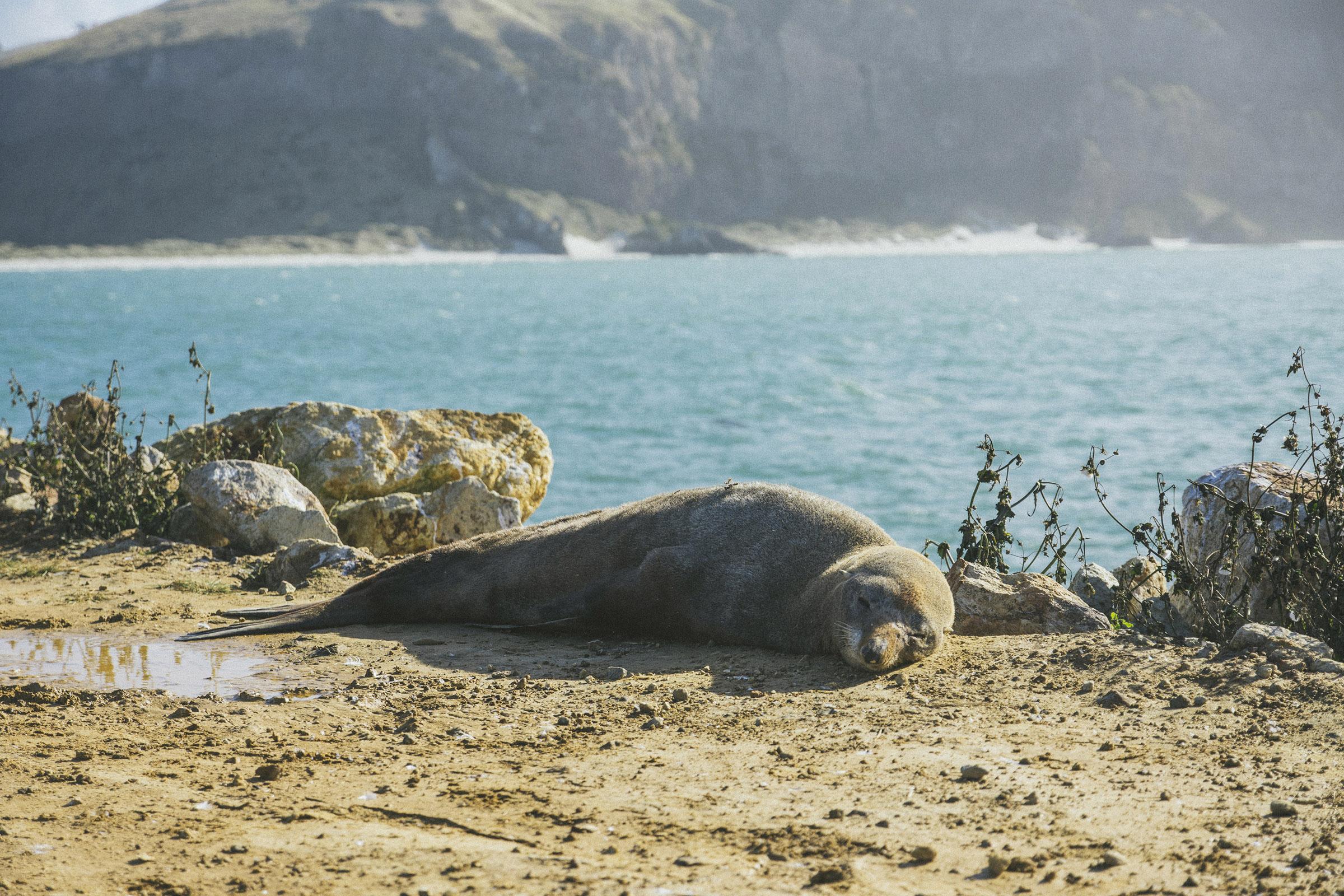 Rohan had never been close to a sealion, so I took him to the Mole at Aramoana on Otago's Peninsula