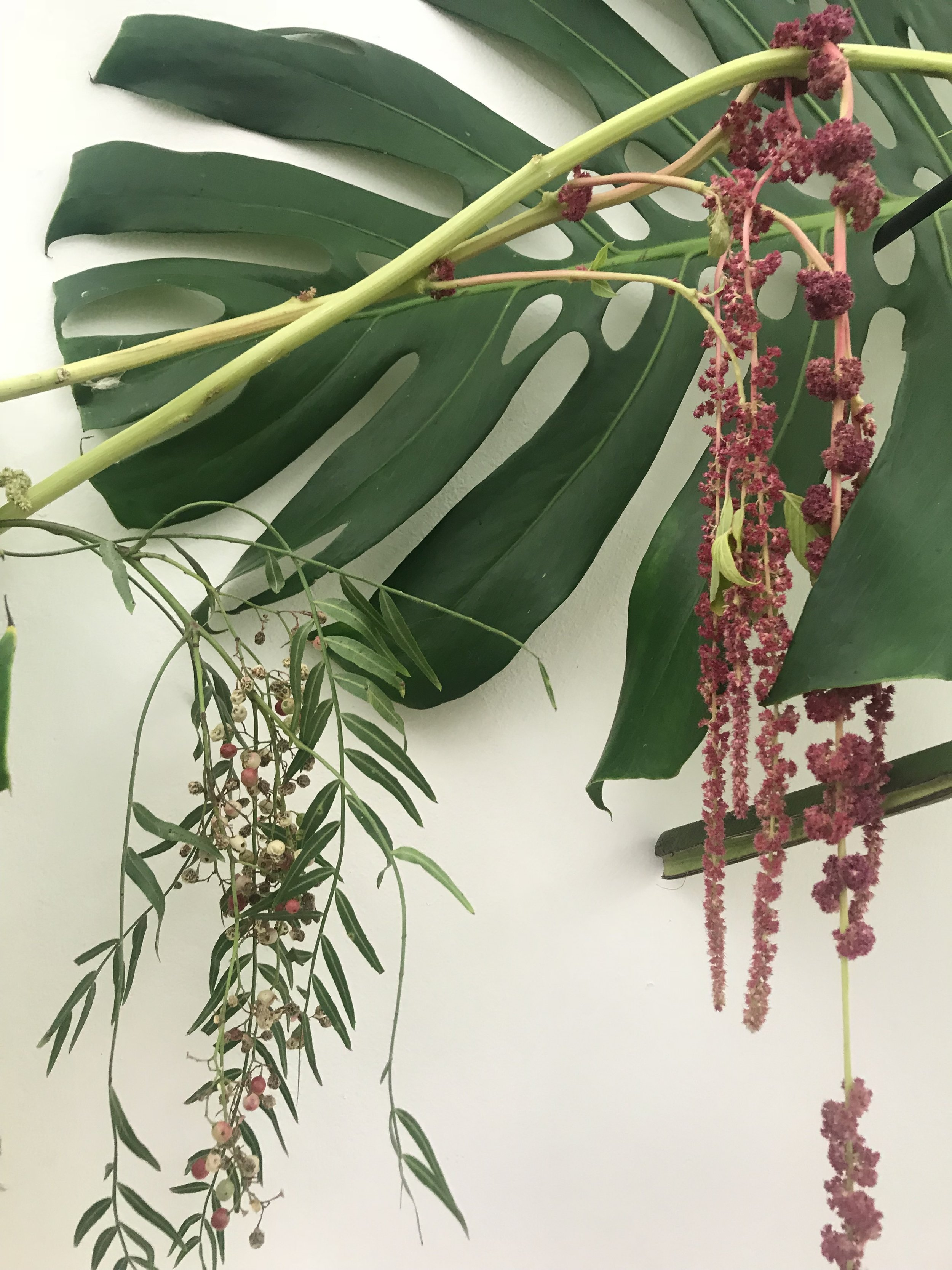 monstera leaf ... large palm