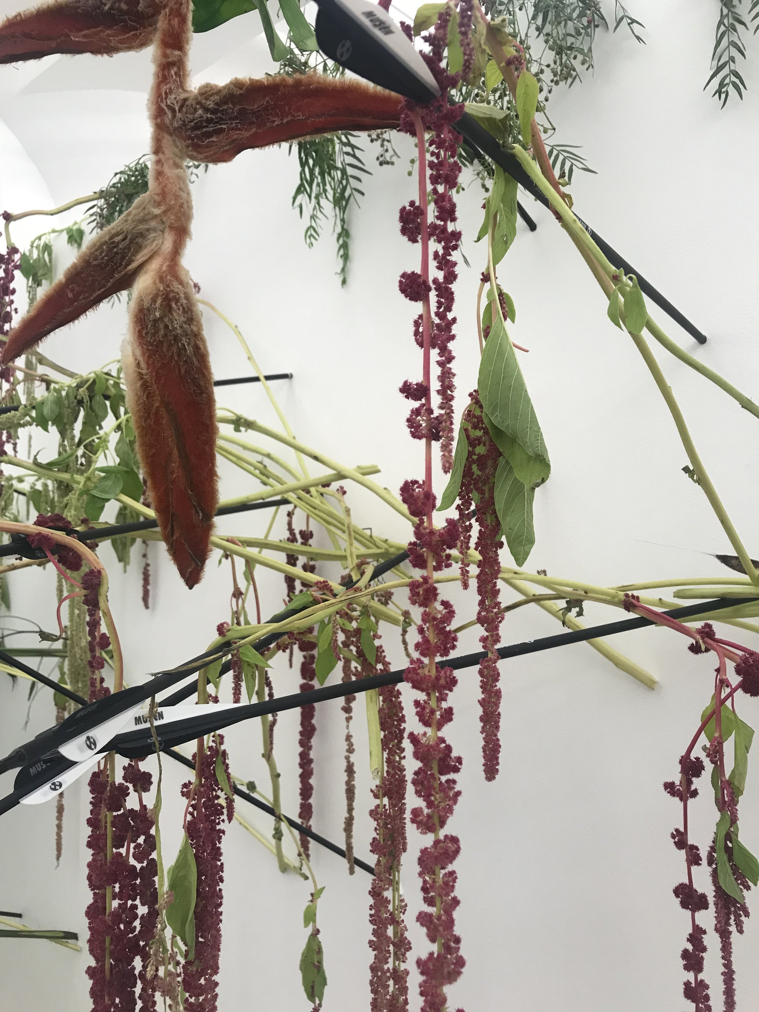 dried and not living ... heliconia