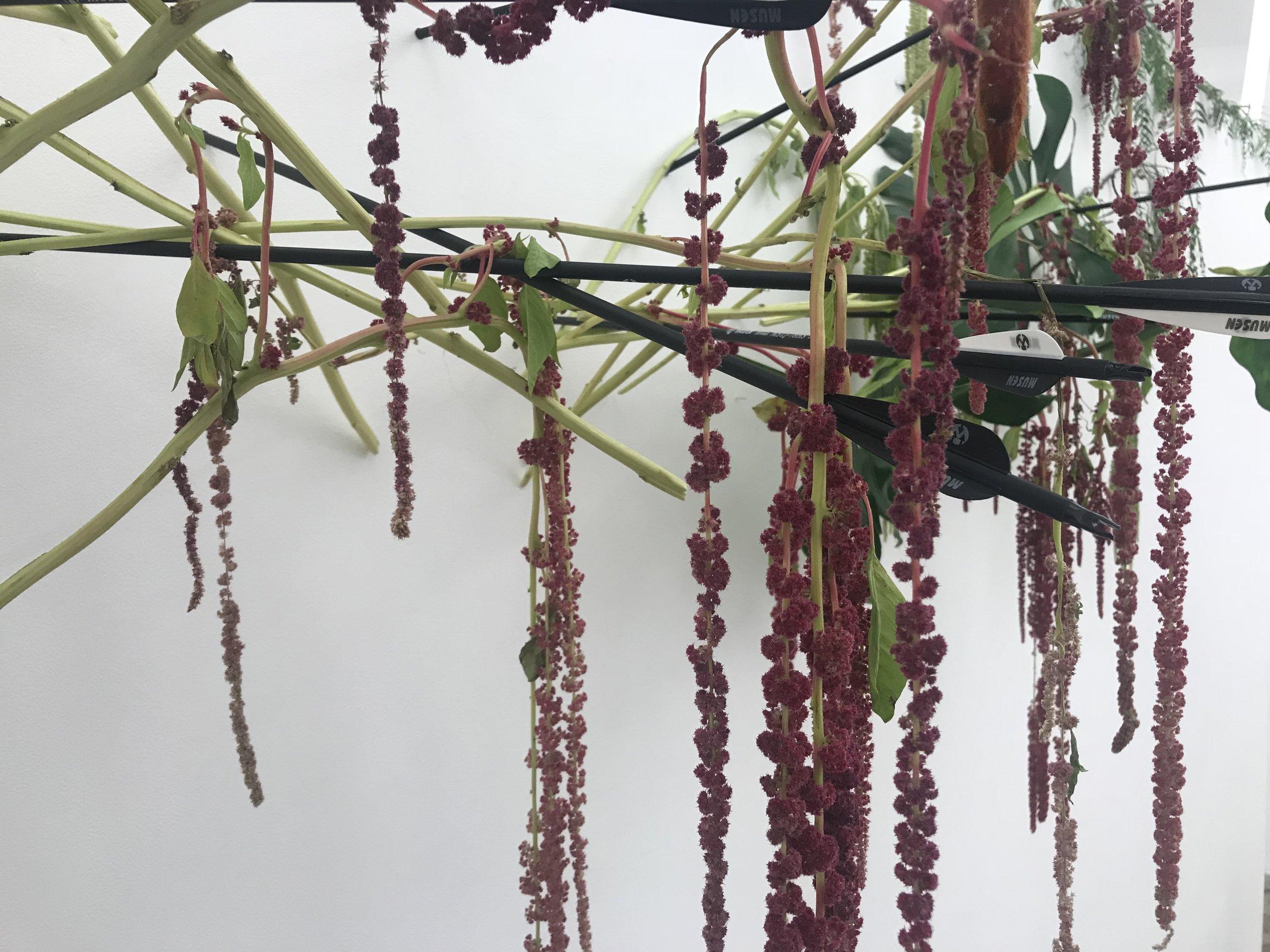 hanging amaranthus ... burgundy and green