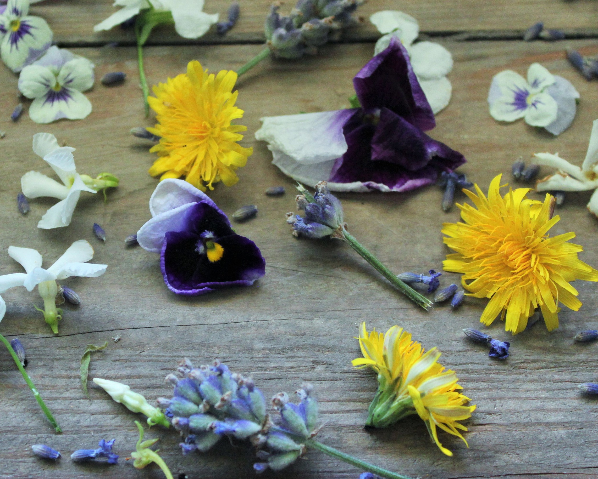 Real Edible Flowers For Cake Decorating  from images.squarespace-cdn.com