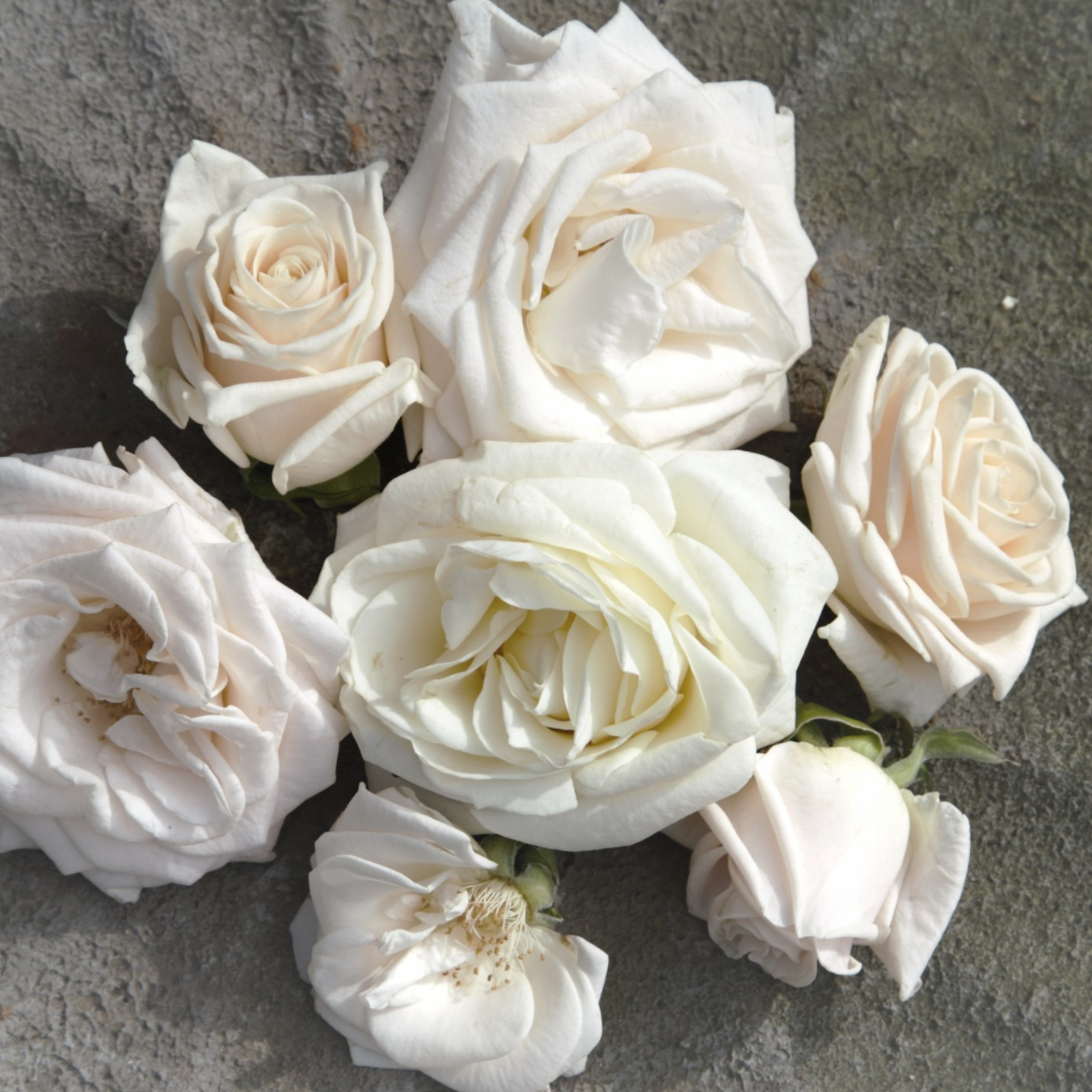 all images by Flowers and Company