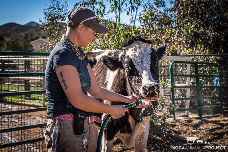 Safran & Danielle, Farm Sanctuary's Animal Acres, Acton, California