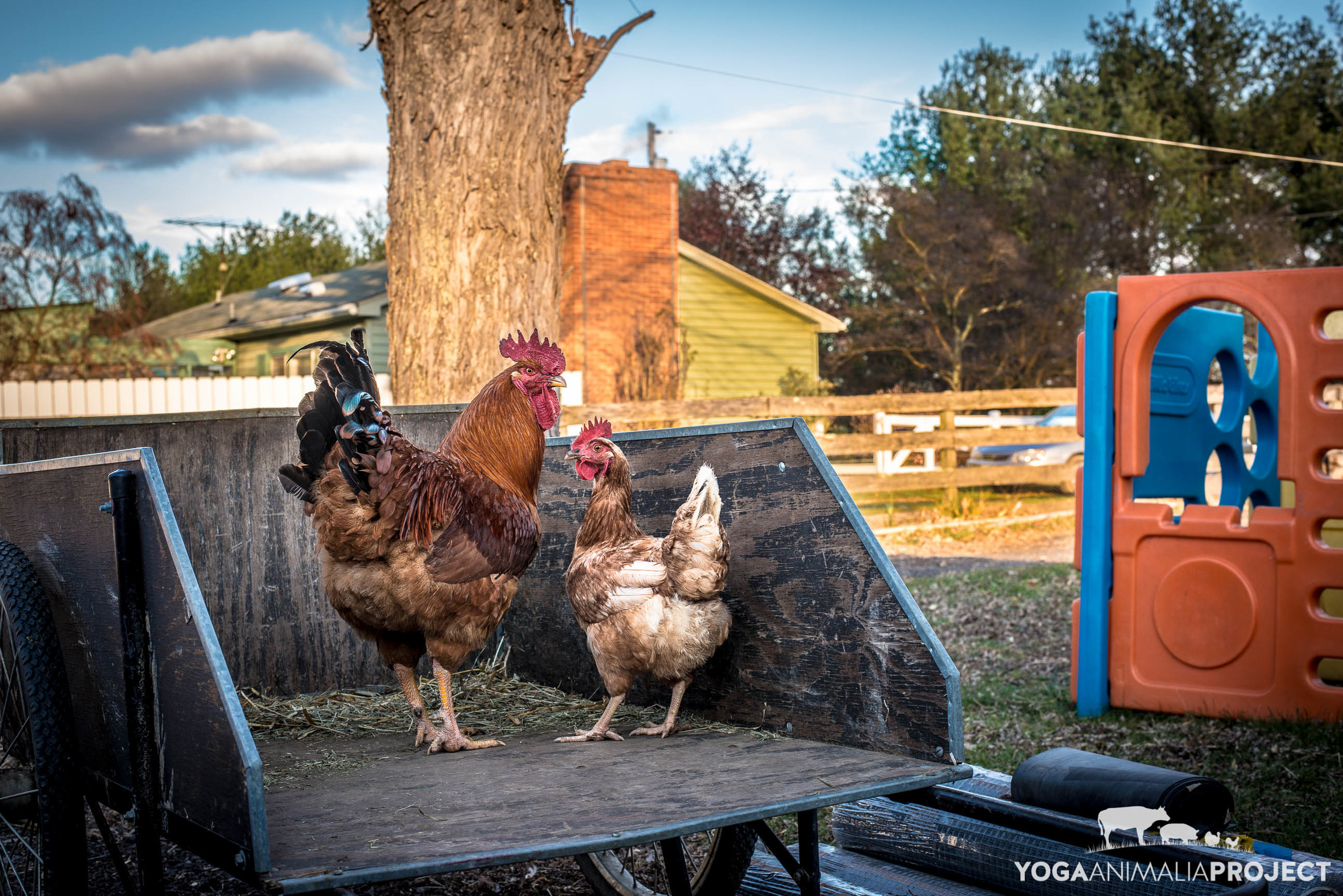 Buffy and Lucy,Peaceful Fields Sanctuary, Winchester, Virginia