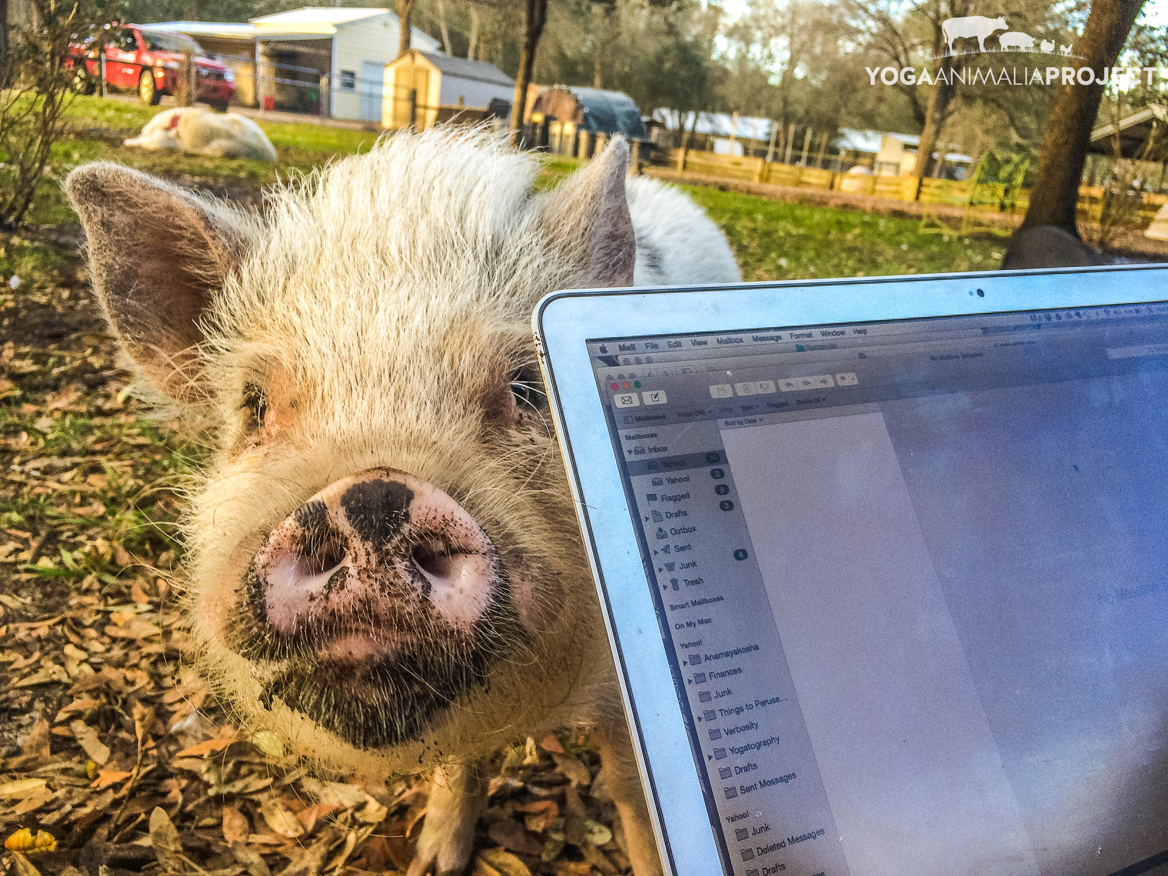 Rudy helps me out with my email, Rooterville, A Sanctuary, Melrose, Florida