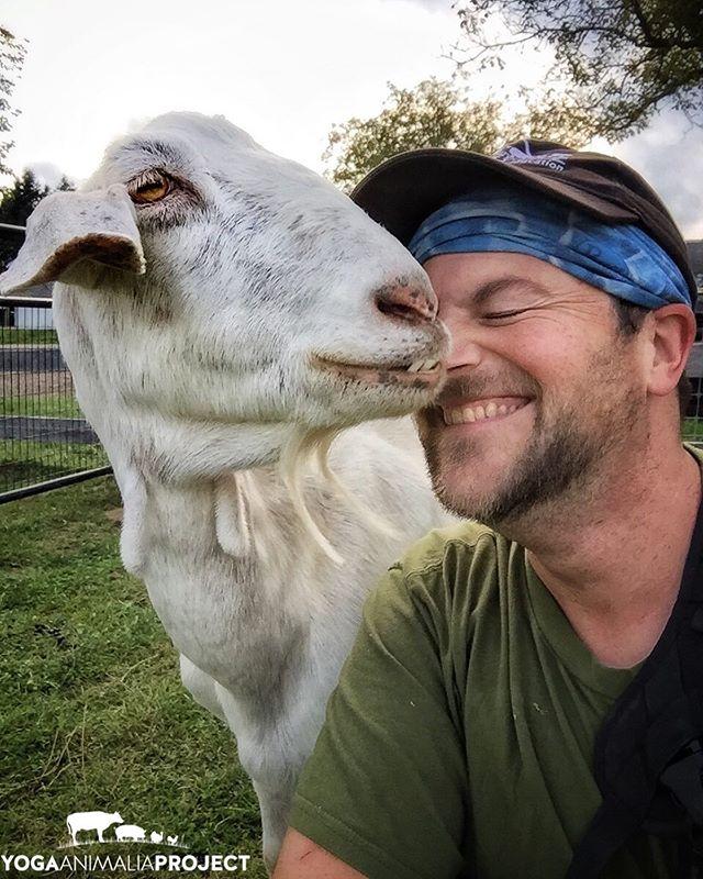 Yoga Animalia: Caprine & Human - Emmy & I Barn Sanctuary, Chelsea, Michigan @barnsanctuary  The moxie of old lady goats, they get me every time 🐐😍🥰😍🥰🐐