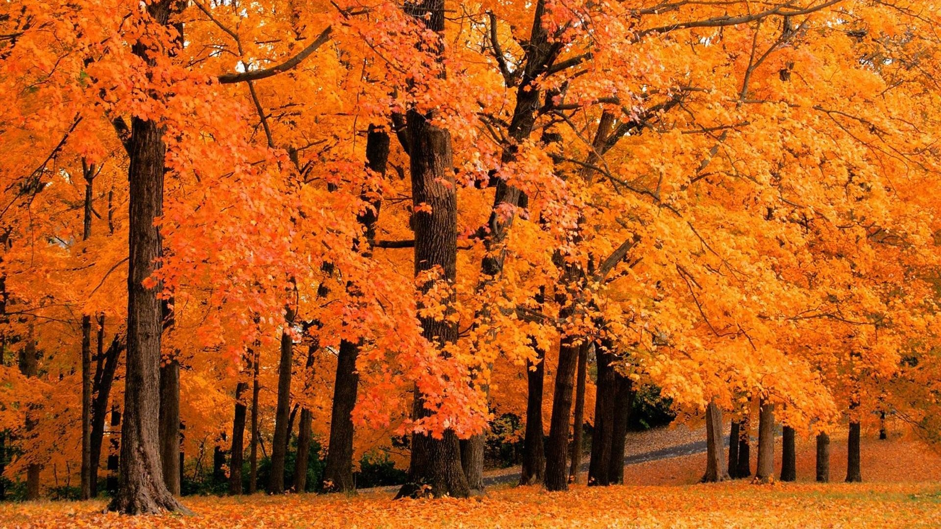 7013843-forest-autumn-trees.jpg