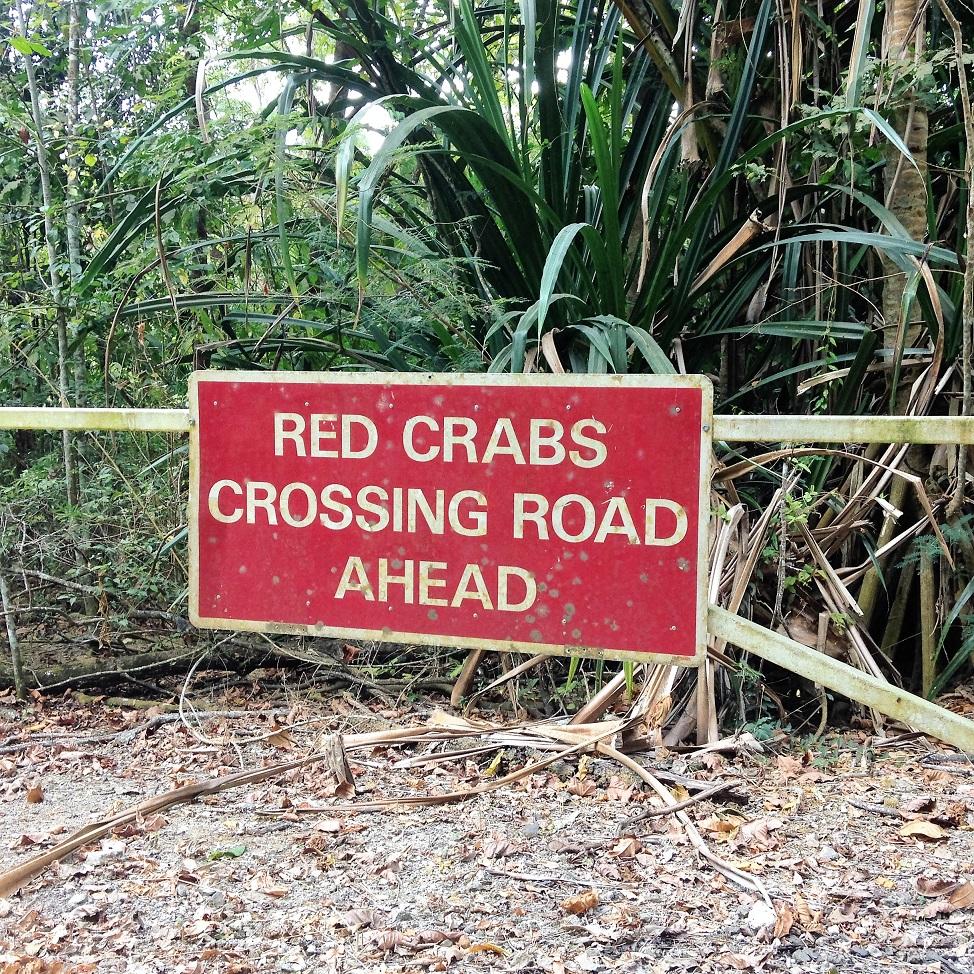 crabs crossing.JPG