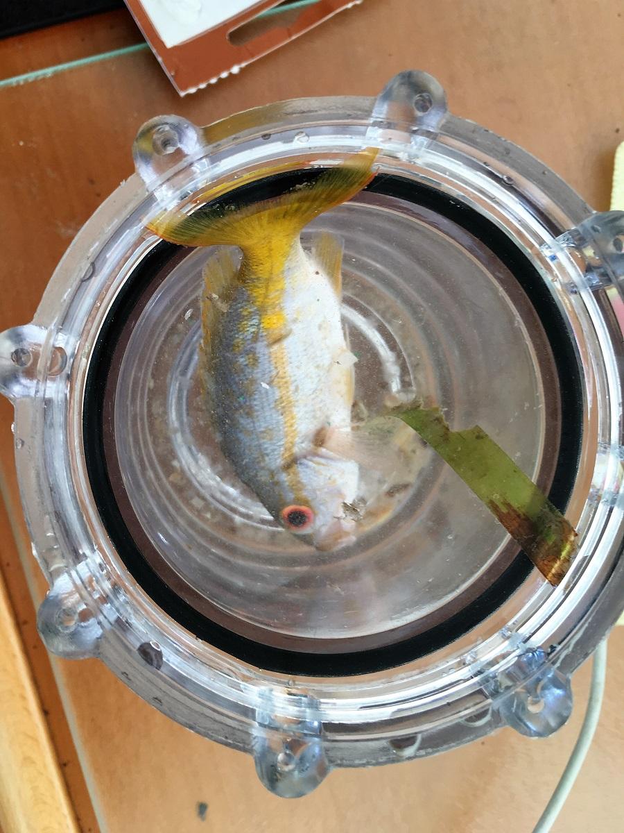 gen fish.JPG