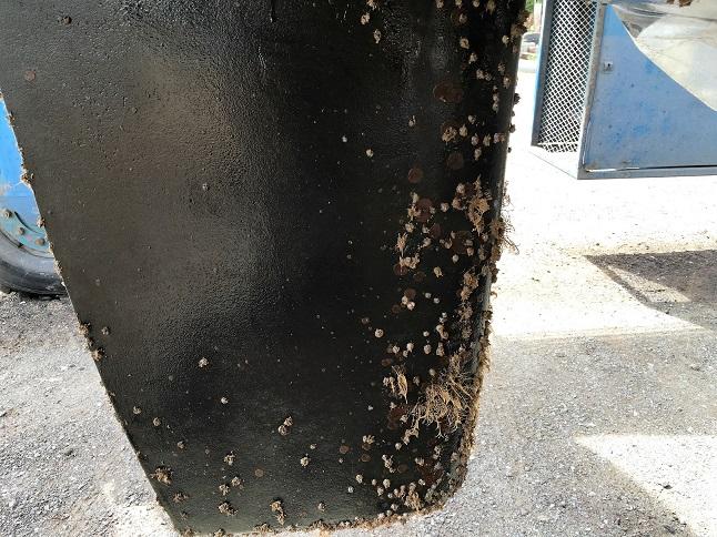 barnacles 2.JPG