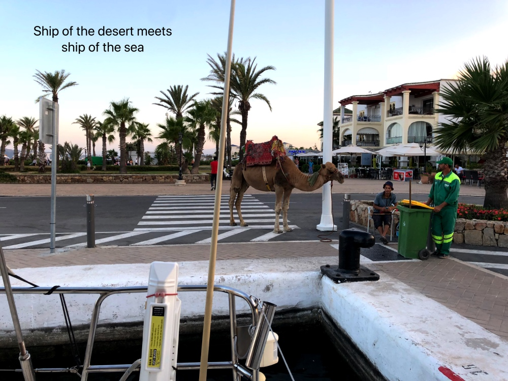 Smir camel.jpg