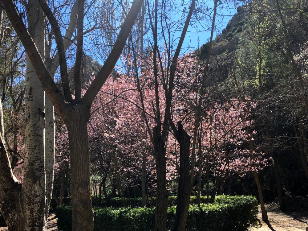 blossom2_Fotor.jpg