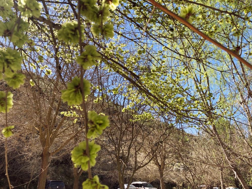 blossom_Fotor.jpg