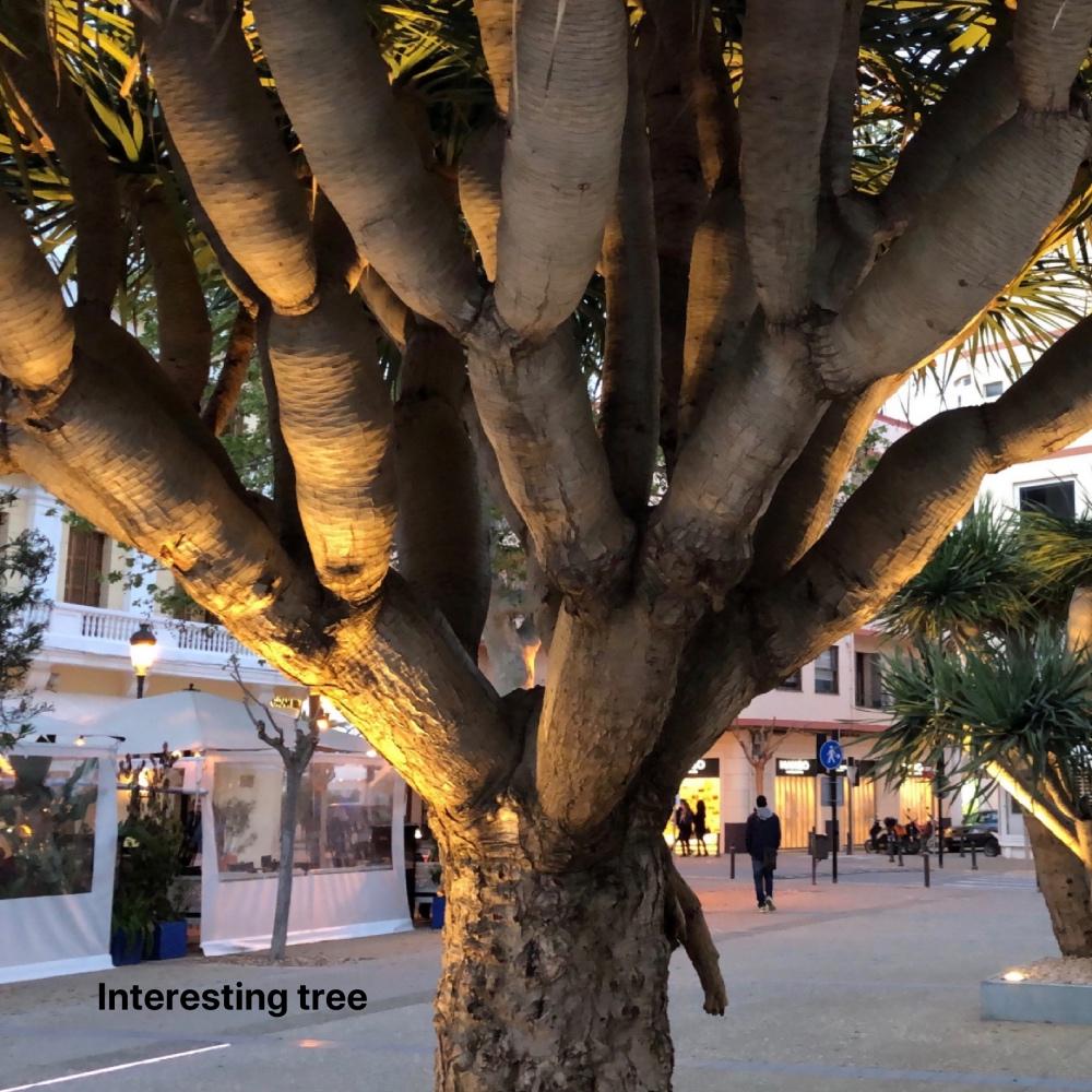 tree_Fotor.jpg