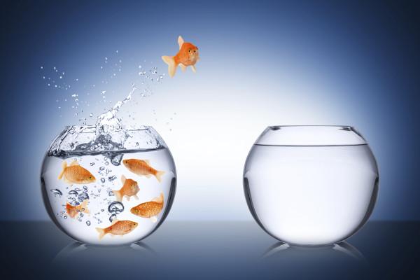 Change, fish.jpg